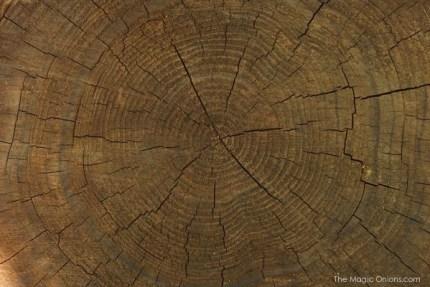 Redwood Forests : The Magic Onions.com
