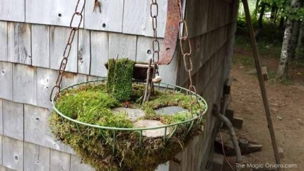 Fairy Garden in a Hanging Basket : The Magic Onions