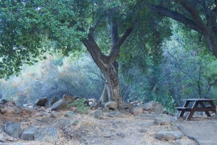 Camping in the Wheeler Gorge Forest, Ojai, CA - The Magic Onions