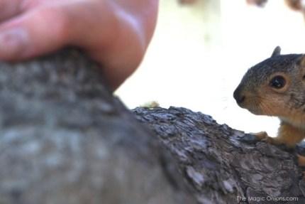 Teaching a Baby Squirrel to Climb : The Magic Onions Blog