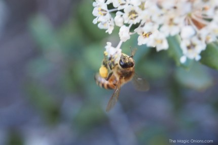 Beautiful Bees : www.theMagicOnions.com