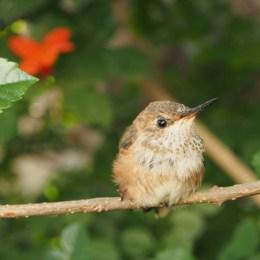 Bye Bye Baby Hummingbird