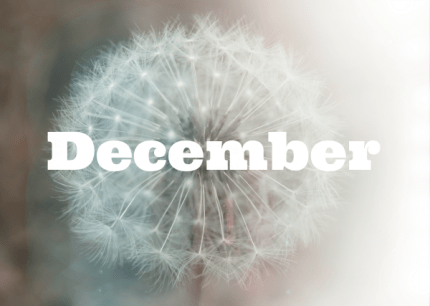 December Dandelion : www.theMagicOnions.com