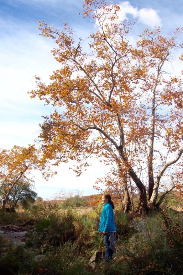 The Magic Onions -- www.theMagic Onions.com -- Nature Walk -  - 17