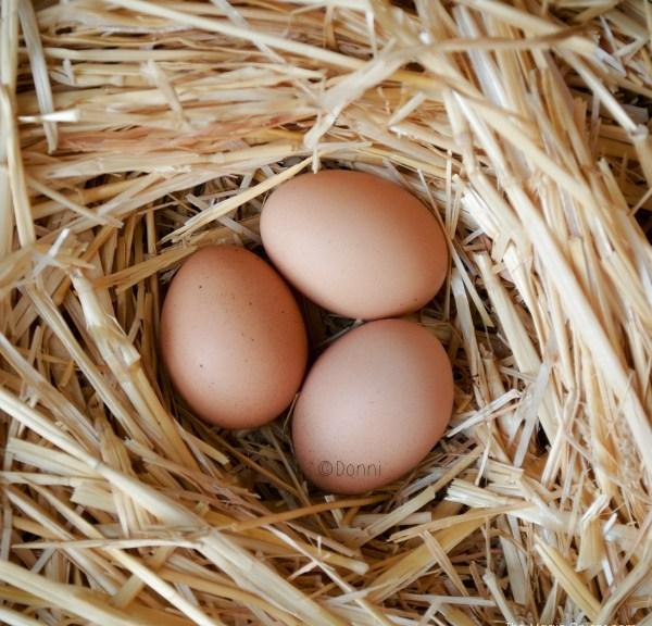 Photo of chicken eggs :: www.theMagicOnions.com