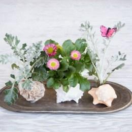 Miniature Spring Garden planted in a Shell :: DIY