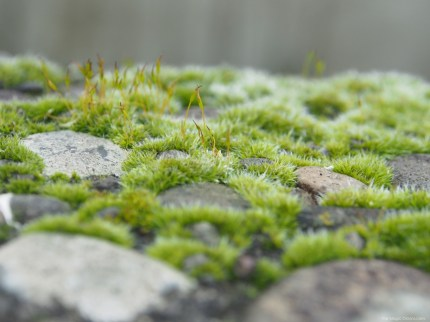 Close up of Moss :: Nature Photos -- www.theMagicOnions.com