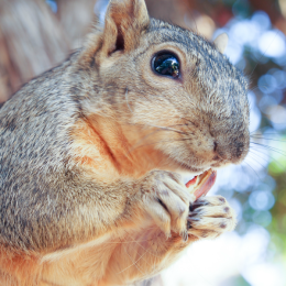 Timone, the Baby Squirrel, and Spring Days