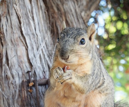 Beautiful squirrel photo on The Magic Onions Waldorf inspired blog