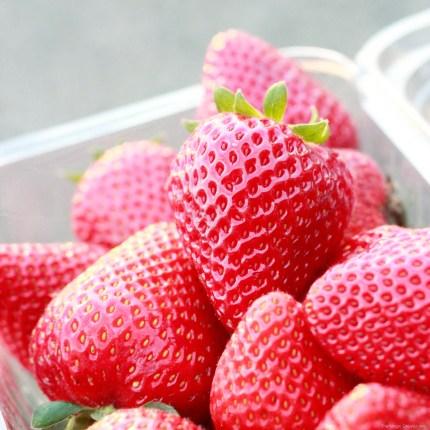 Beautiful loosBeautiful strawberry photo on The Magic Onions Waldorf inspired blog