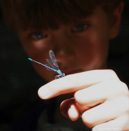 Boy with dragonfly