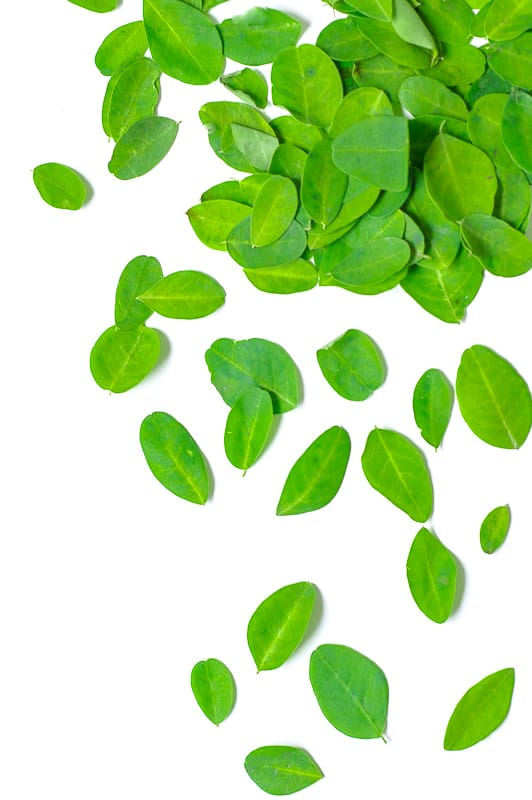 Murungai Elai, Moringa leaves scattered on a white background.