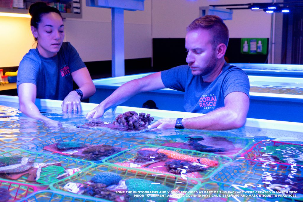 Rescue Under the Sea: Disney Helps Save Florida's Coral Reefs - The Main Street Mouse