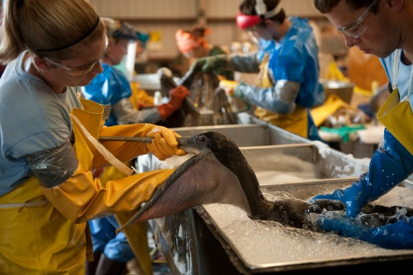 Crews work to clean oiled birds. Credit: Joel Sartore/National Geographic Creative