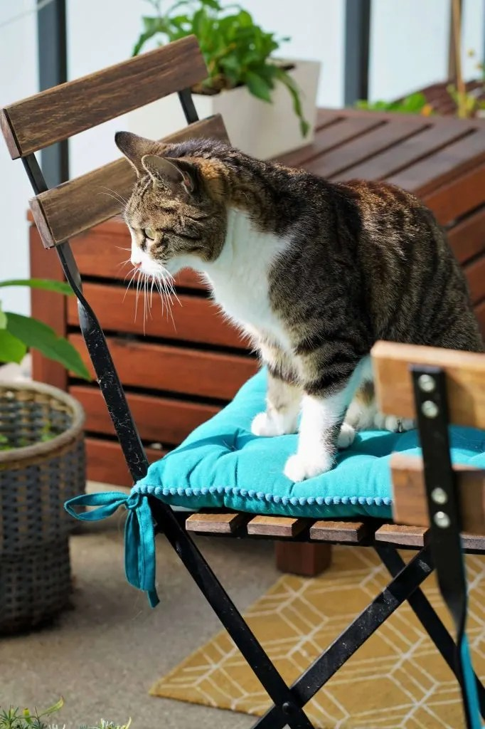 12 ways to make your balcony cat proof
