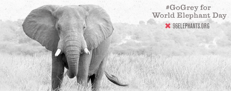 gogrey for world elephant