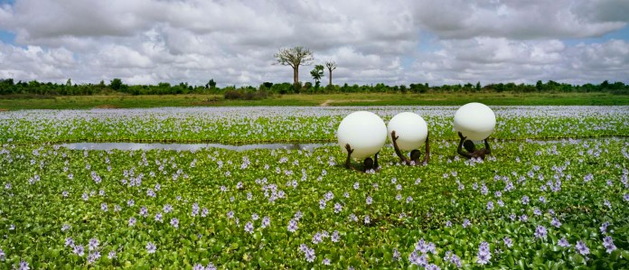 Douze Douze Douze, Madagaskar, 2012 ∏ Scarlett Hooft Graafland
