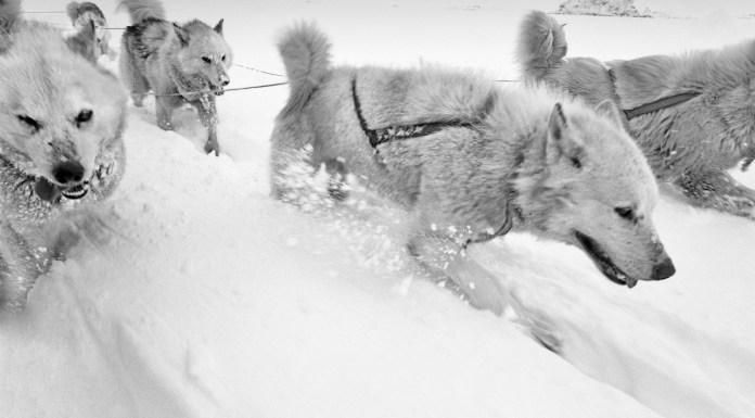 Paolo Solari Bozzi, Sermilik Fjord, Greenland, 2016 © Paolo Solari Bozzi