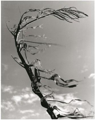Fulvio Roiter Meolo (Ve), Sibilo, 1949 © Fondazione Fulvio Roiter
