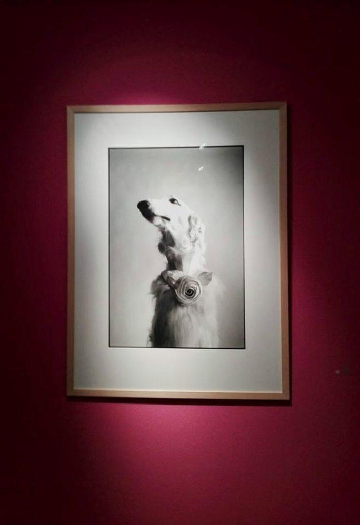 elliott Erwitt mostra cani treviso