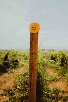 Exploring Idaho Wineries - HAT Ranch Winery - TheMandagies.com