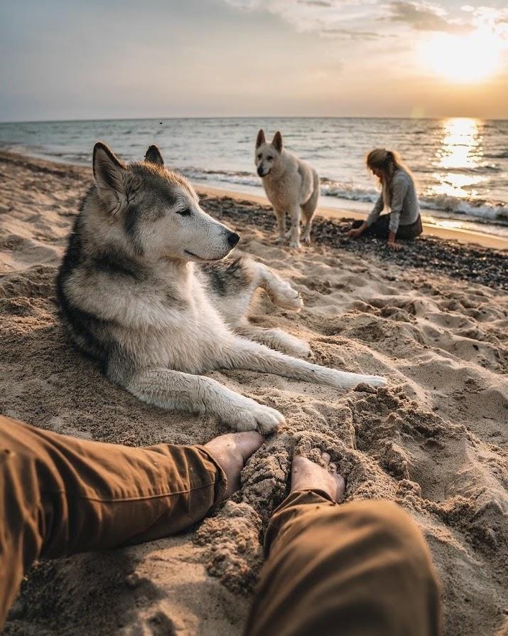 huskies at the beach