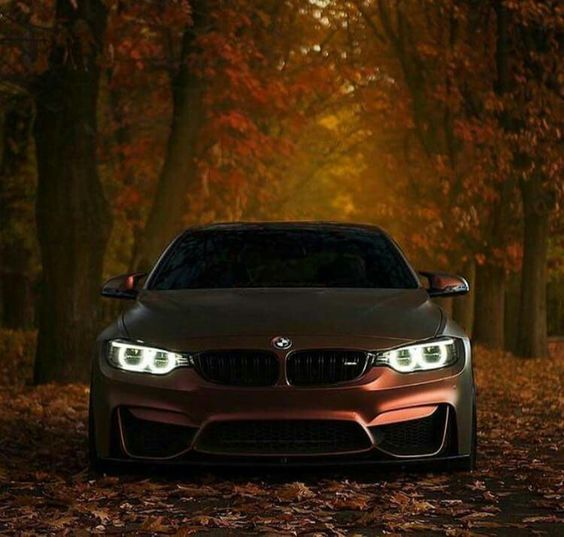 bmw in fall colors