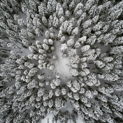 snow covered pine trees from above
