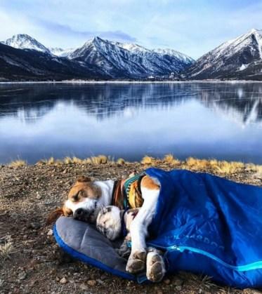 cat and dog sleeping in sleeping bag near mountain lake