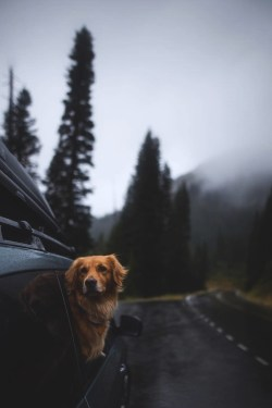 dog looking out widow of car as it drives down a rainy highway