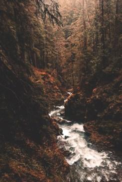 fast moving creek running through woods