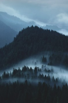 foggy mountains and trees