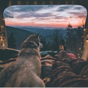 husky and owner taking in the view