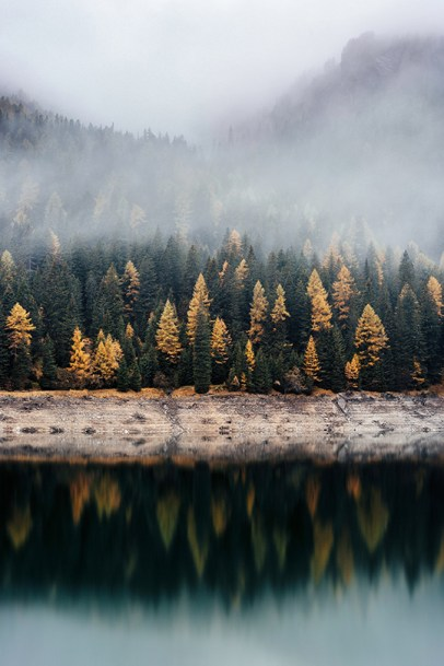 misty morning on lake with trees