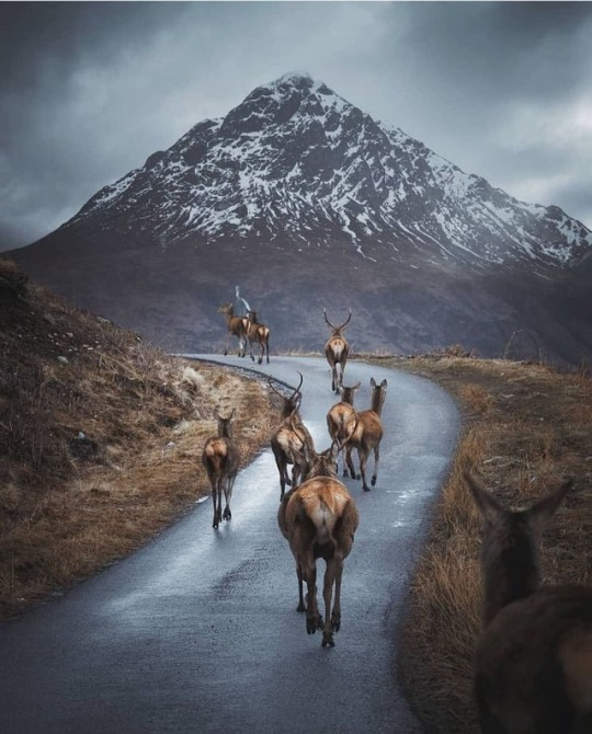 reindeer walking on mountain road
