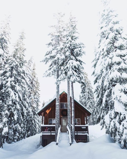 snowy cabin with trees