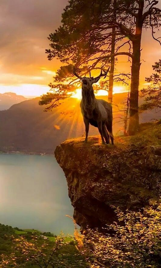 large buck in front of stunning sunset