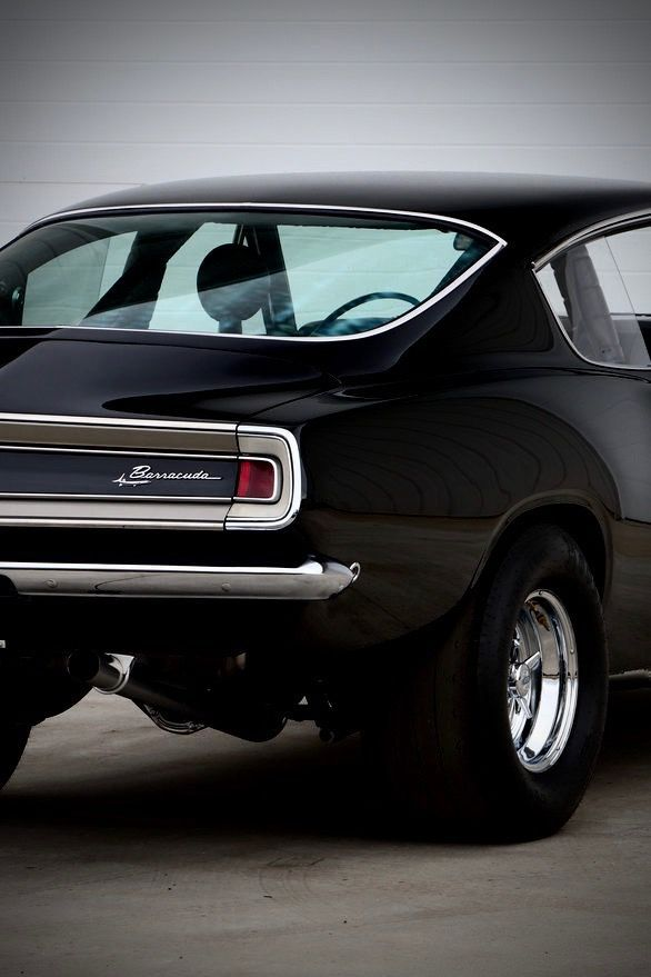 black barracuda rear end