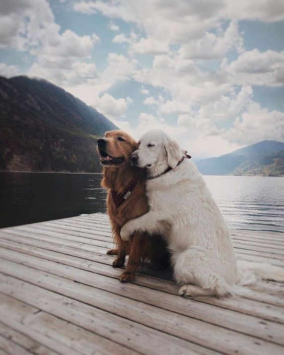 dog hugging her partner on lake dock
