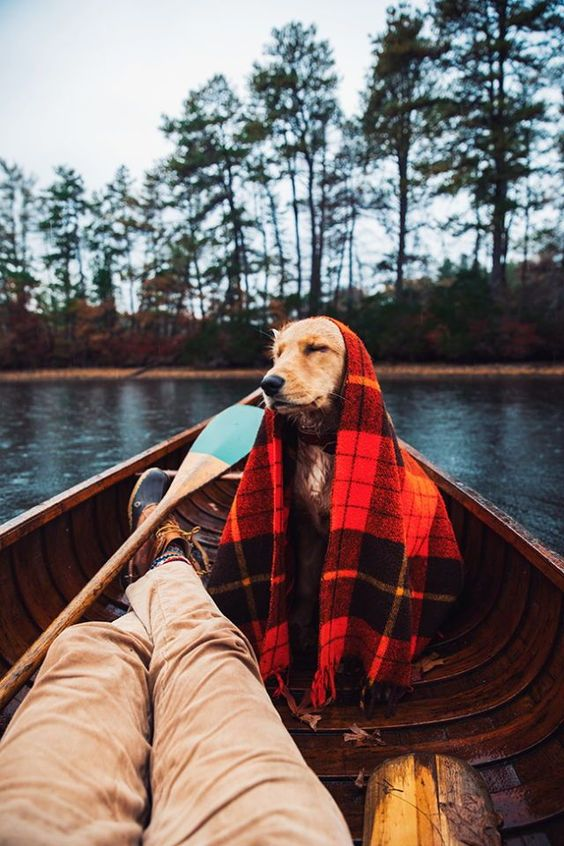 dog with a blanket on in boat with a man