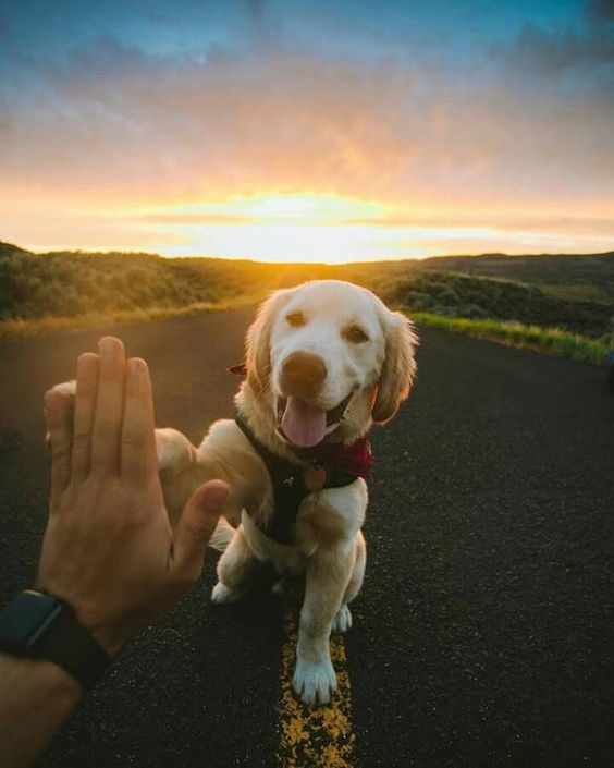 doggo high five