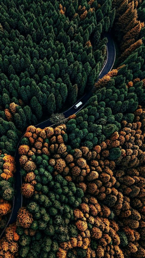 scenery from above fall road