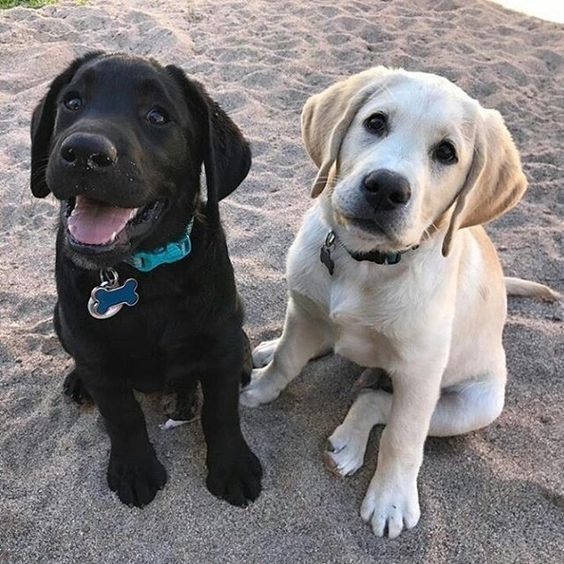 two good boys