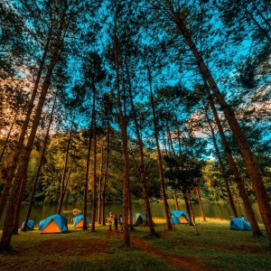 the manly life - camping tents among trees near lake