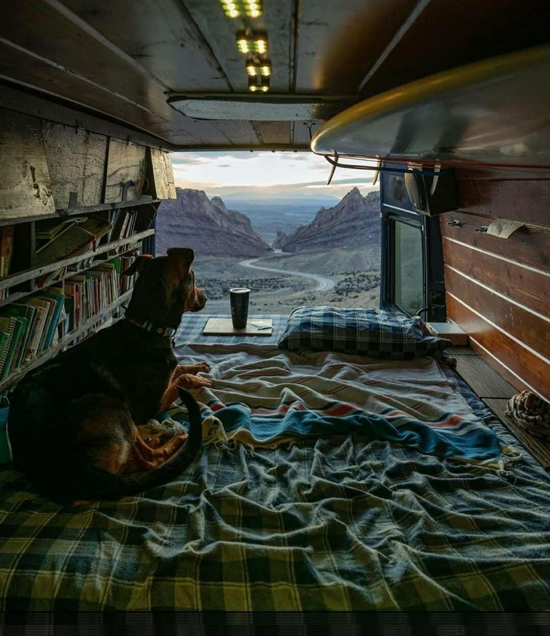 camper van with doggo