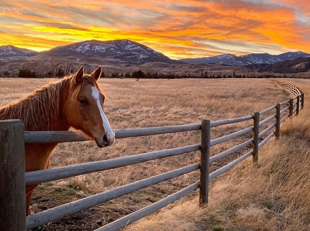 Mountain Sky Guest Ranch