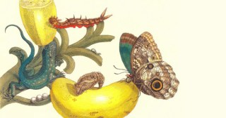 Art, Science, and Butterfly Metamorphosis: How a 17th-Century Woman Laid the Foundations of Modern Entomology