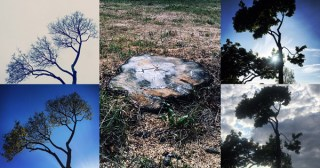 The Death of a Tree: Eulogy for Friend
