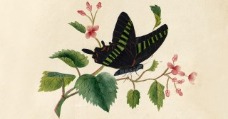 Sarah Mapps Douglass's Flowers: The First Surviving Art Signed by an African-American Woman