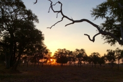 African sunset Kapani Lodge, Luangwa Valley
